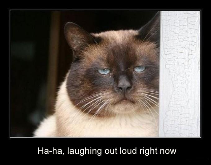 Cat Laughing...