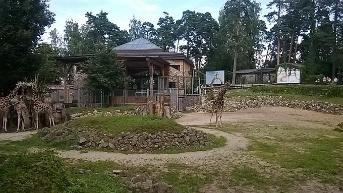 Riga Zoo. Giraffes.
