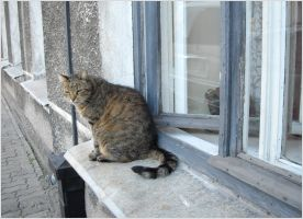 A cat on a window